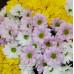 Хризантема микс от FlorPresent